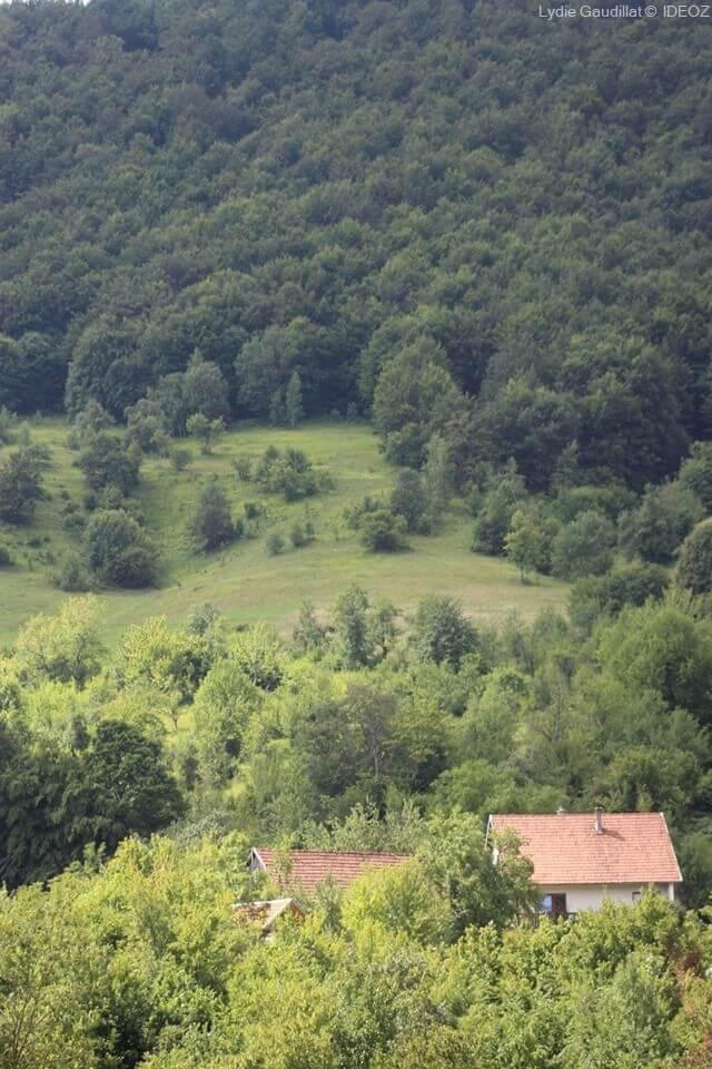 Refuge des ours de Kuterevo : rencontre avec les ours bruns de Croatie 9
