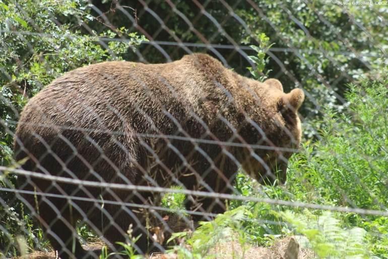 Refuge des ours de Kuterevo : rencontre avec les ours bruns de Croatie 18