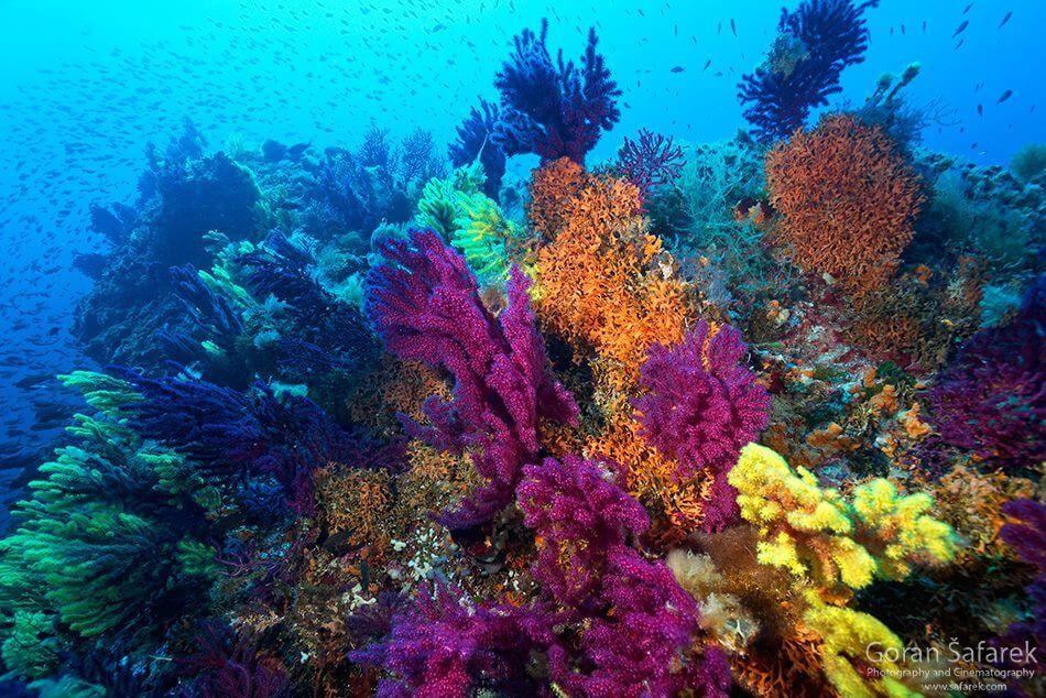 coraux fonds marins en croatie à lastovo