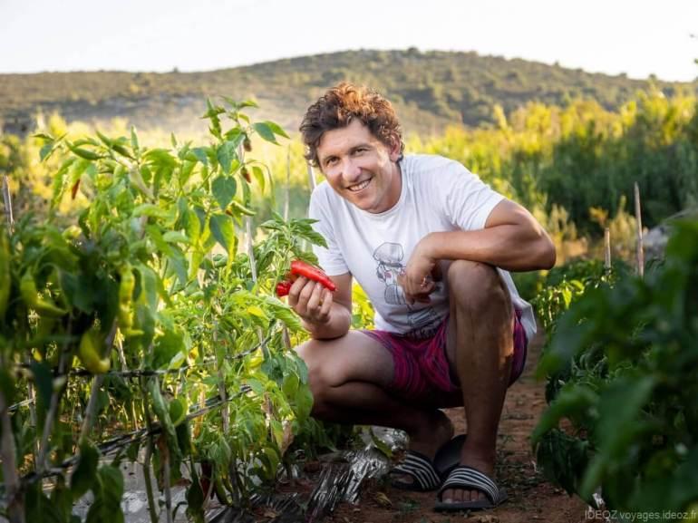 Krsto Matulic avec ses piments rouges