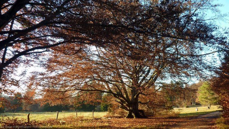 arbre d'automne sur le sentier entre andechs et le lac ammersee