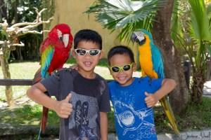 Bali Bird Park - Duo perroquets