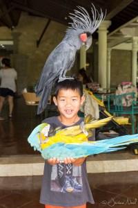 Bali Bird Park - Luka bébé