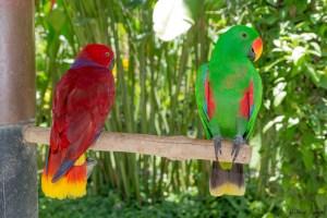 Bali Bird Park - Perroquet 2
