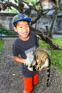 Bali Reptile Park - Luka iguane