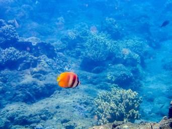 Epave japonaise - poisson