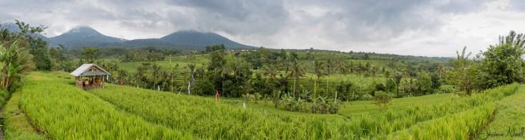 Jatiluwih - panorama rizières