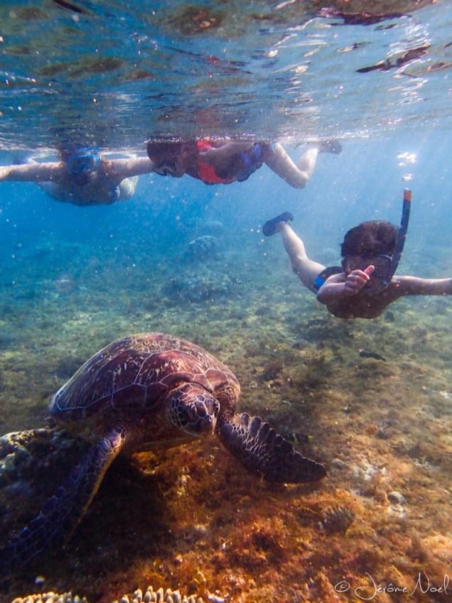 Apo Island - tortue et tous les trois