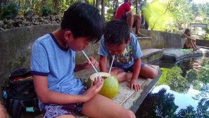 Siquijor - Balete Tree - Jus de coco