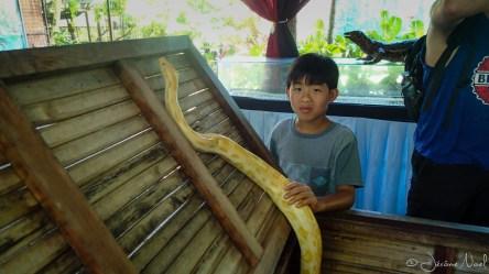 Zoo - python jaune