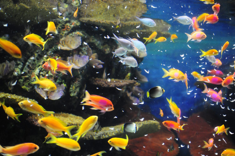 Aquarium de Shanghai, Hǎiyáng Shuǐzúguǎn 海洋水族馆