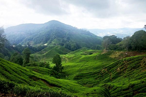 Malaisie : à la découverte de la jungle et des cultures de Cameron Highlands