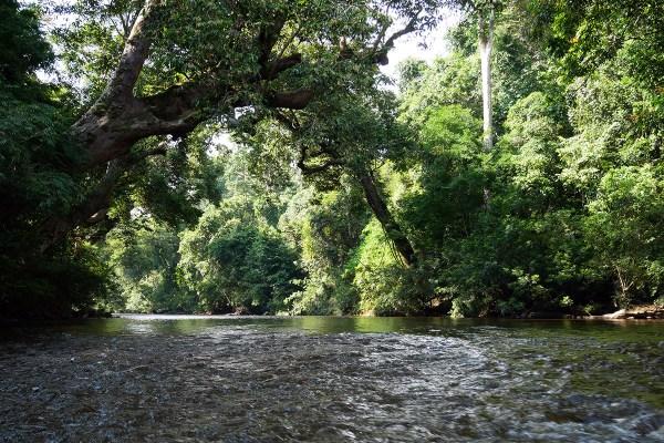Malaisie : après-midi baignade dans les cascades du parc Taman Negara