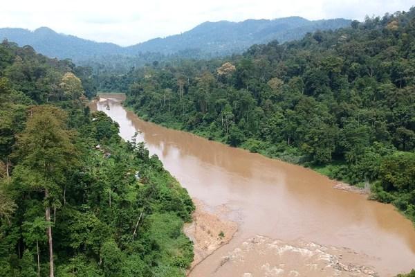 Malaisie : la jungle, la vraie, au Taman Negara
