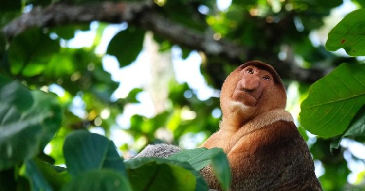 Malaisie : le parc national de Bako, un goût de jungle et de faune sauvage