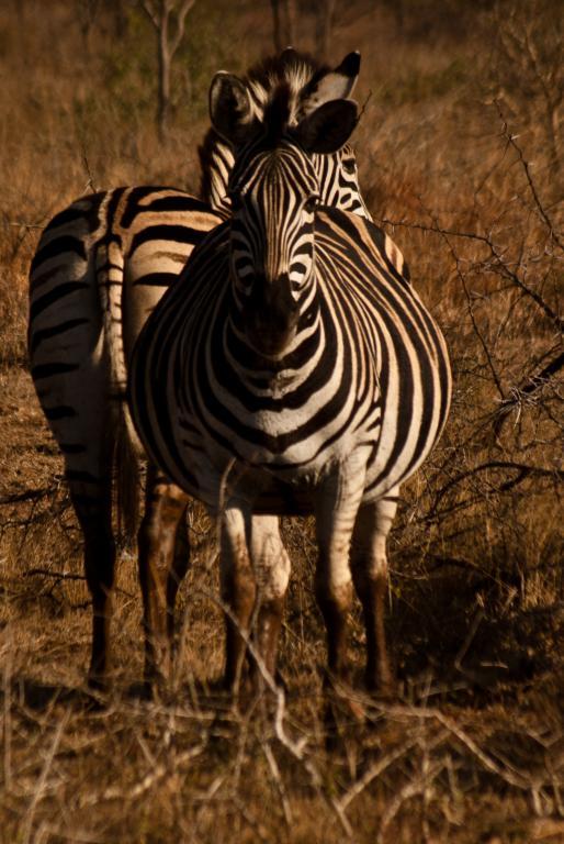 partir en voyages pas cher en afrique du sud