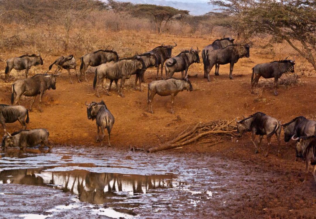 troupeau point d'eau afrique du Sud