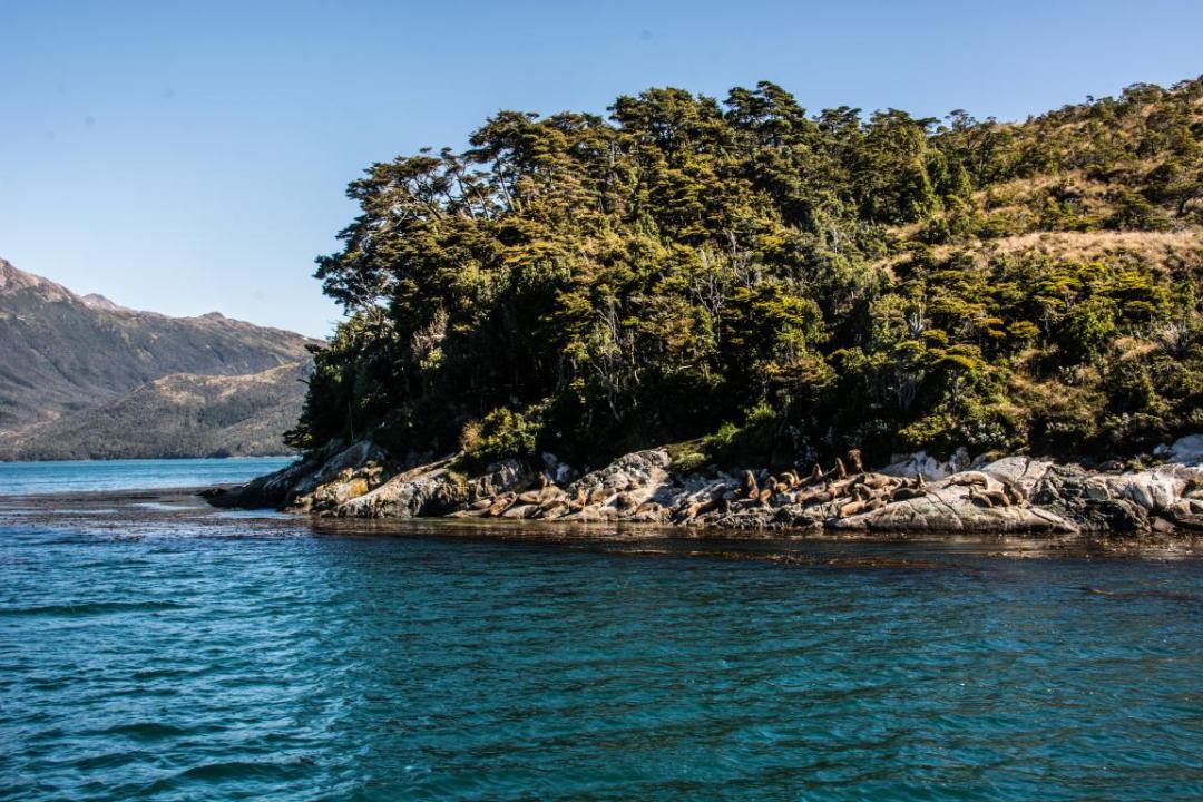 lions de mer sur ilot patagonie
