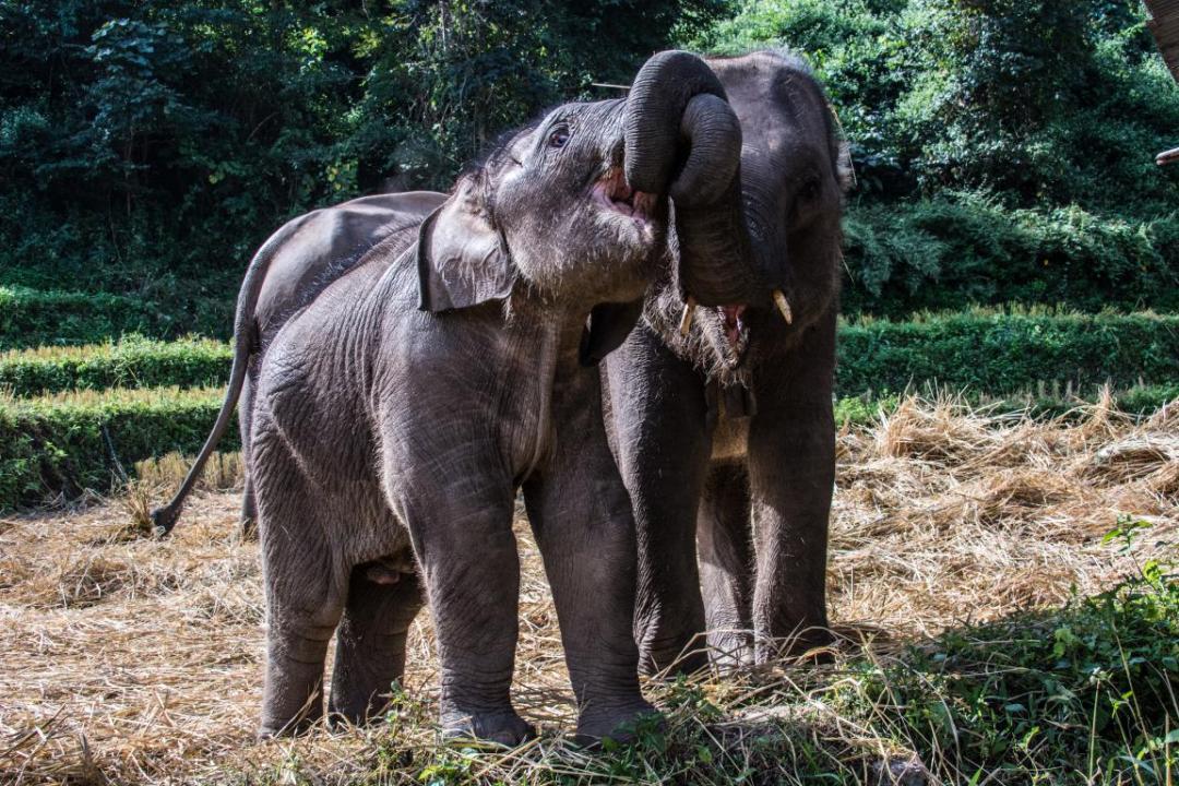 mission avec les éléphants d'Asie