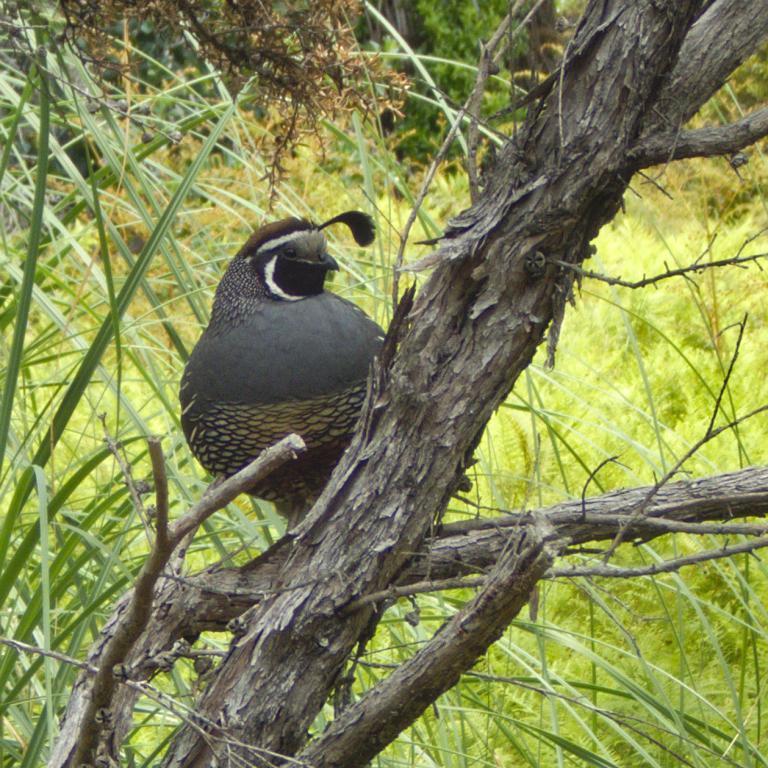 oiseau sauvage avec huppe en nouvelle zélande