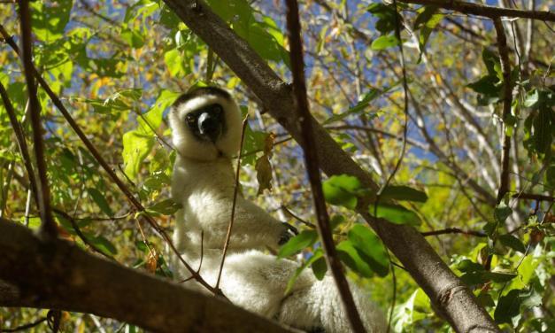 L'île de Madagascar et ses beautés incomparables