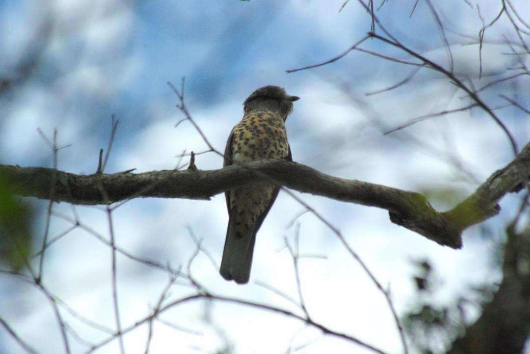 oiseau sur l'île de Madagascar
