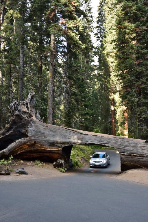 tunnel log séquoia ouest américain