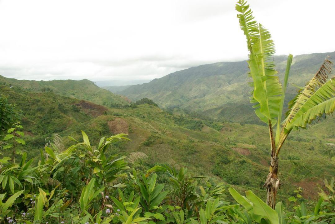 île de Madagascar et ses arbres du voyageur