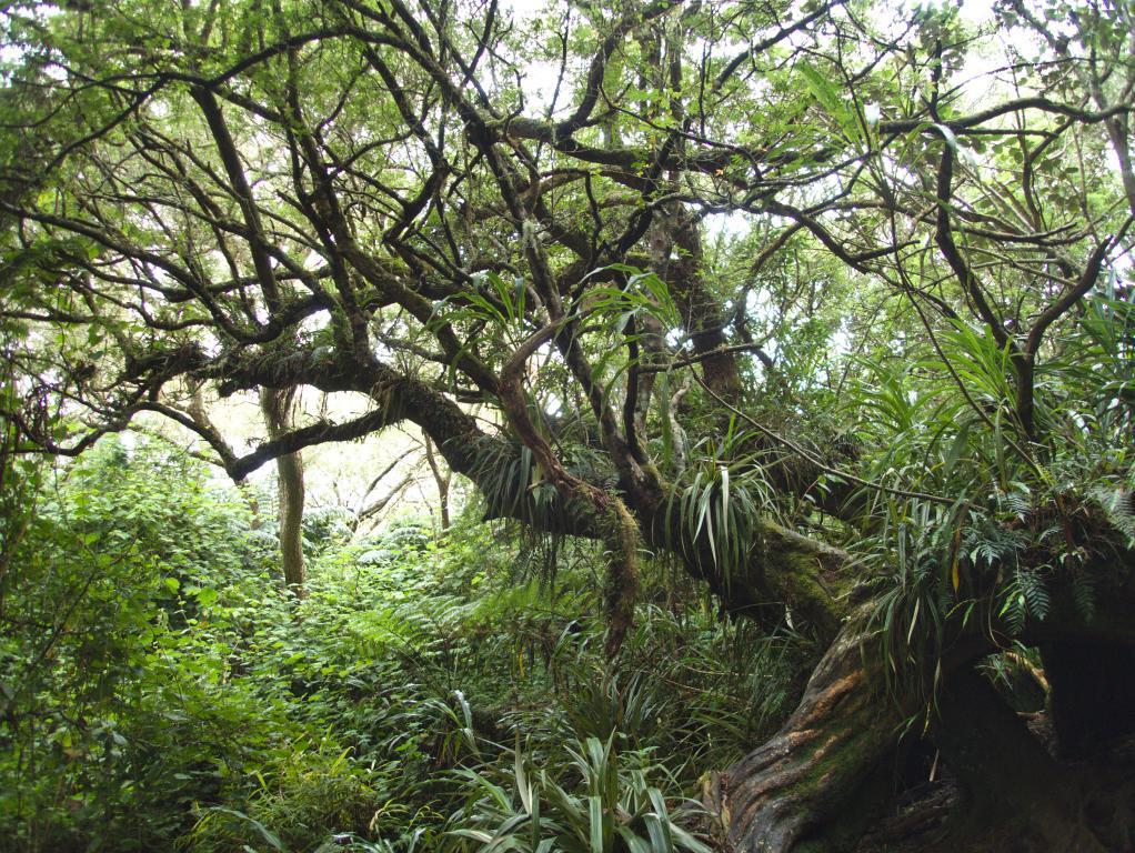 la végétation tropicale et exubérante de l'île de la réunion