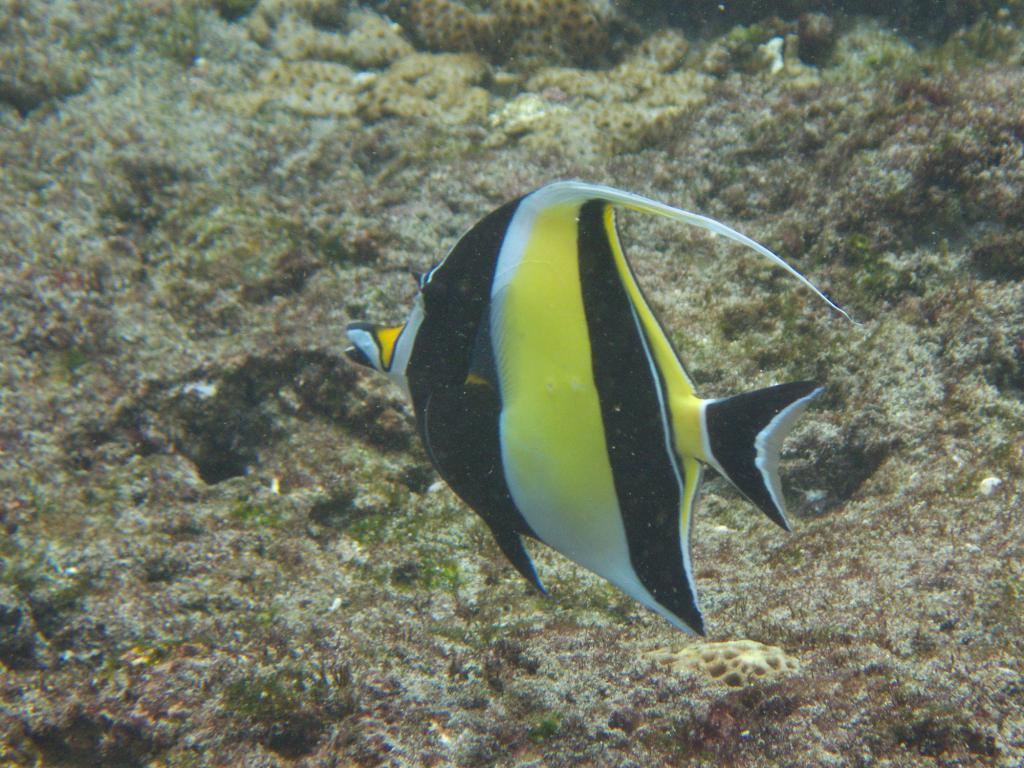 les fonds marins indonésiens