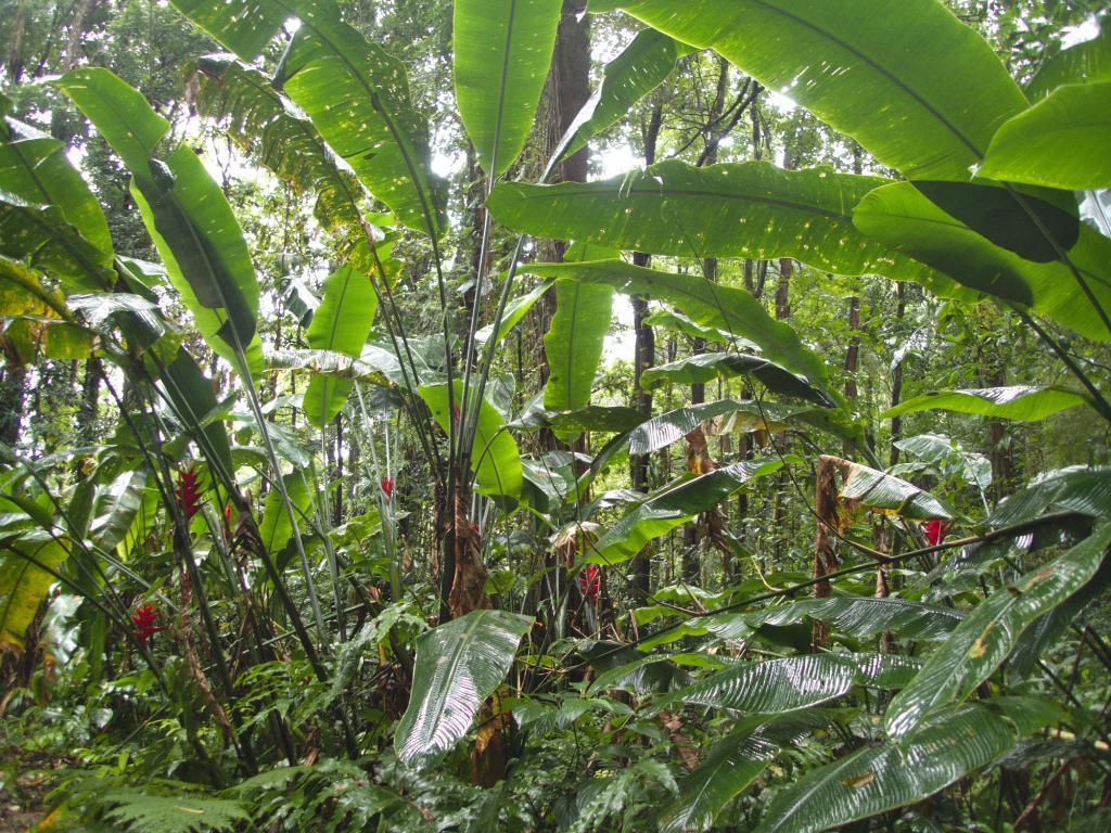 la végétation exubérante martiniquaise dans les caraibes