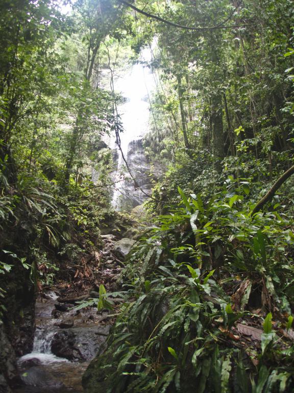 jungle du nord de la Martinique dans les Caraïbes