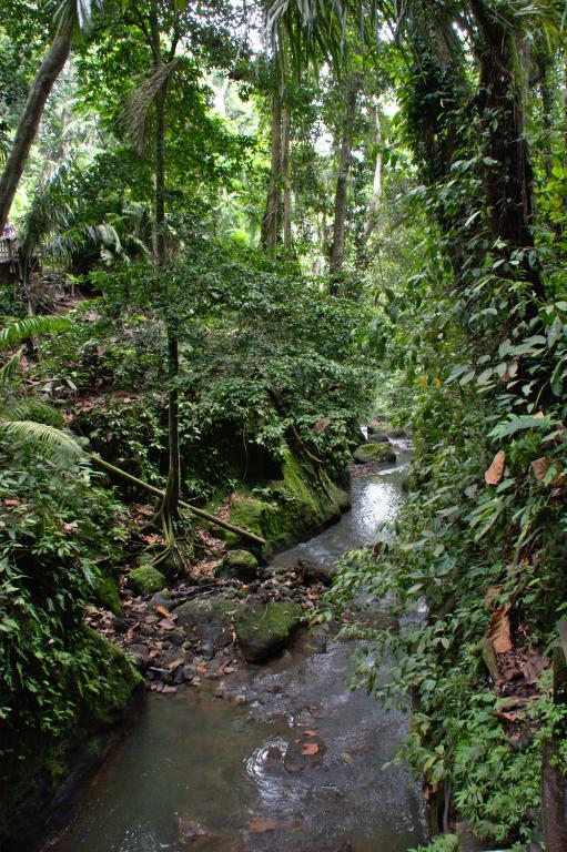 la jungle indonésienne en plein coeur d'ubud