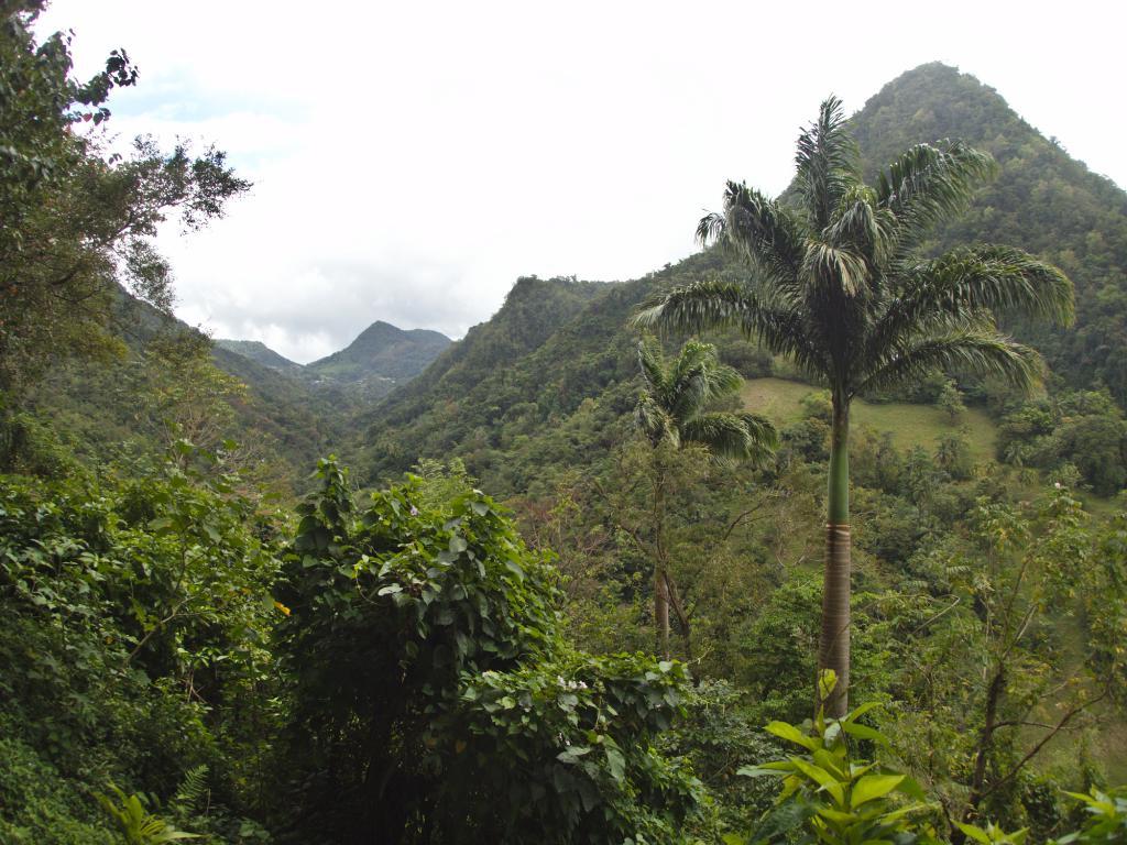 paysage du nord de la martinique dans les caraibes
