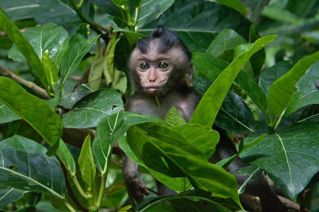 petit singe dans la forêt d'ubud à bali