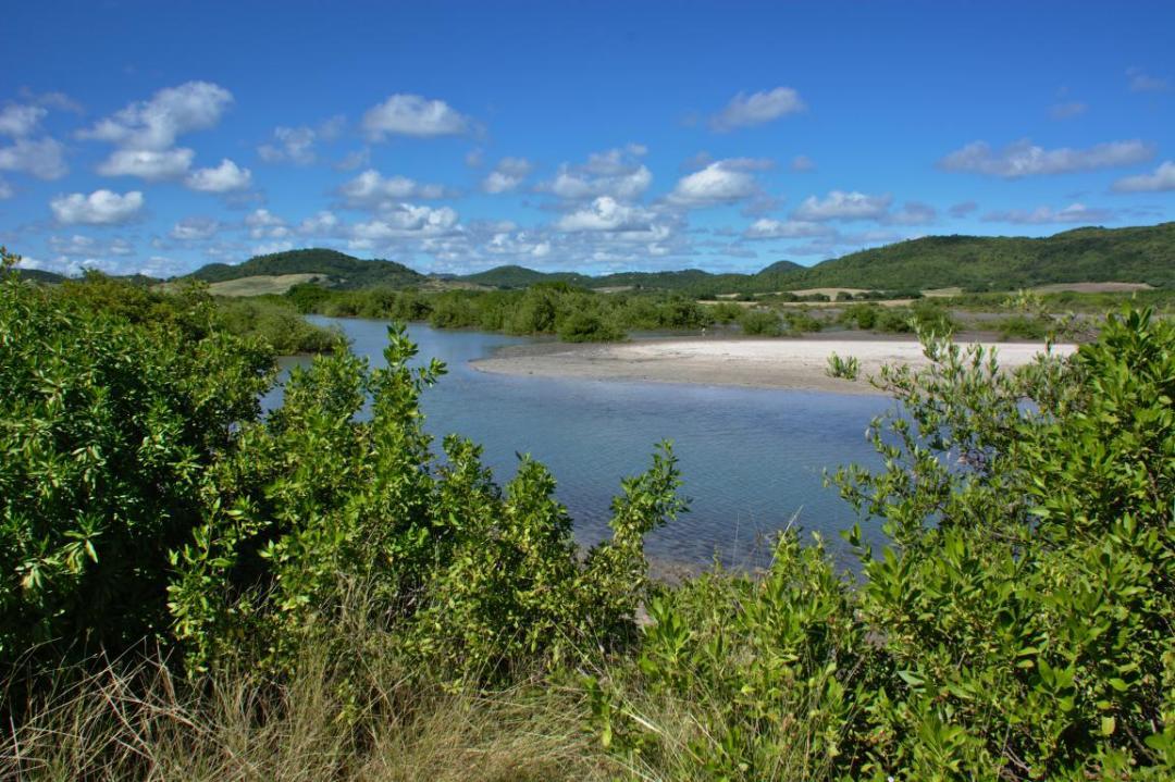 paysage de mangrove des Caraïbes via la Trace des Caps