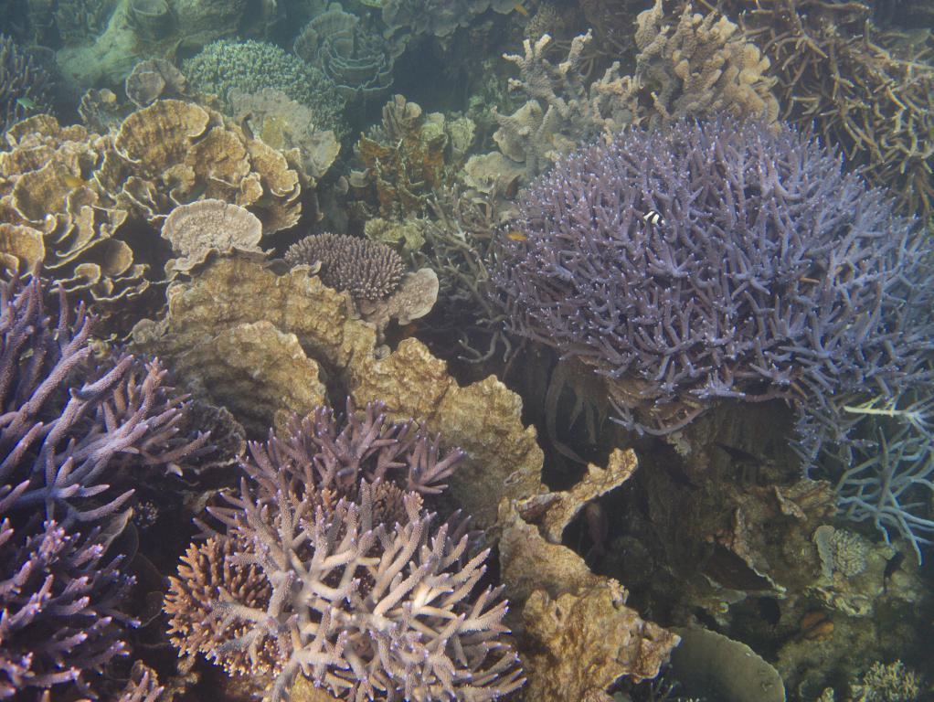 snorkeling sur la barrière de corail