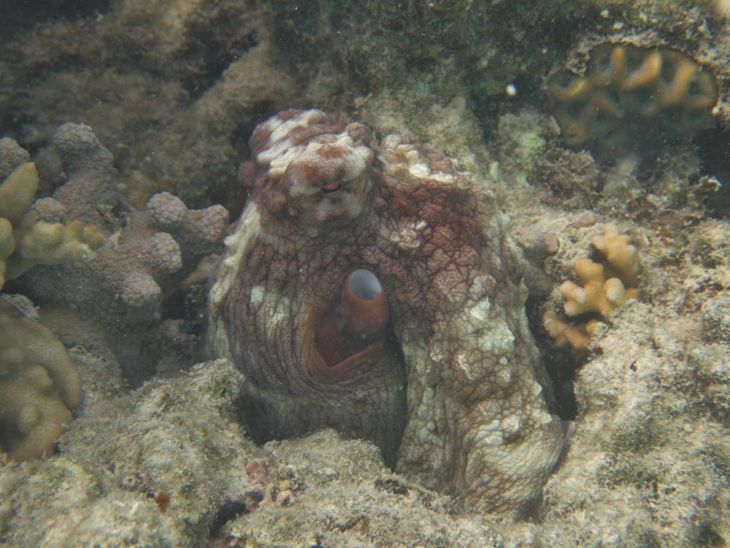 les fonds marins en australie