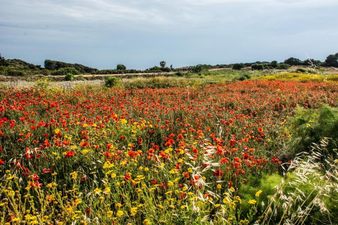 ustica une ile méditerranéenne fleurie