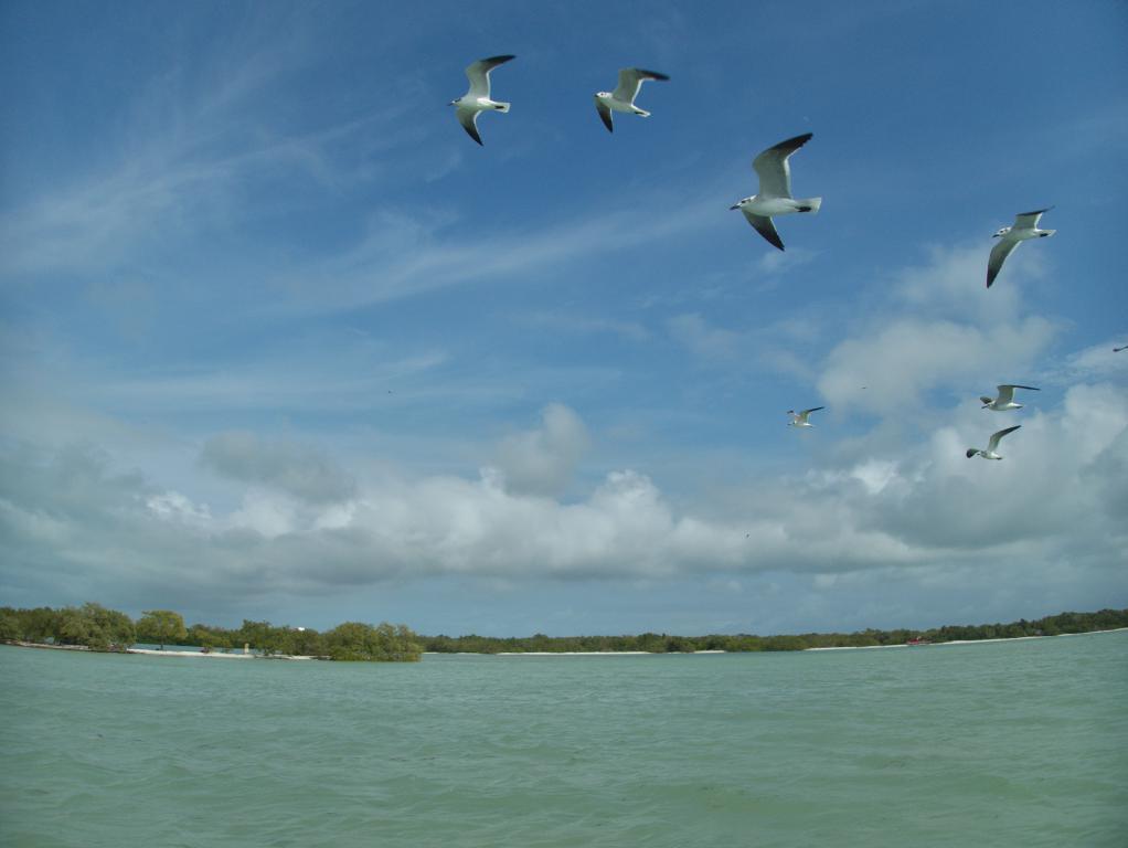 Holbox ile Yucatan