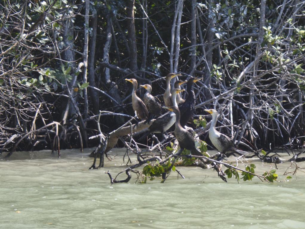 celestun bateau yucatan groupe de cormorans
