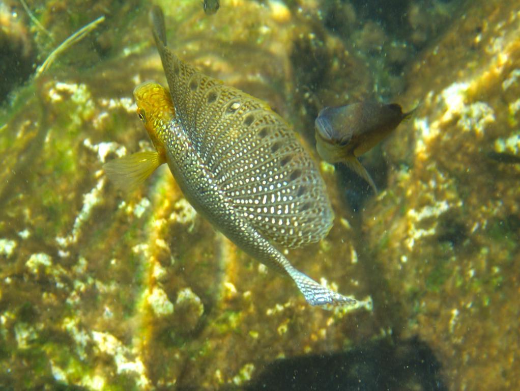 snorkeling dans cenote azul peninsule yucatan