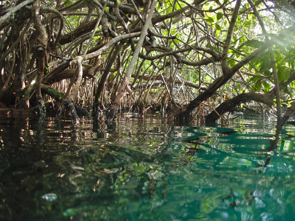 cenote tulum peninsule yucatan