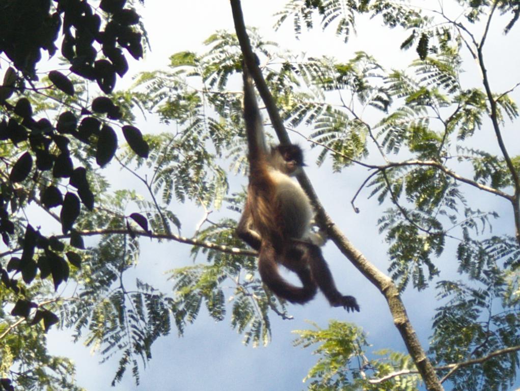 singe reserve yucatan
