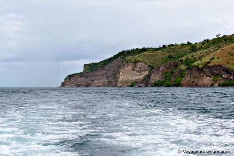dauphins en Martinique