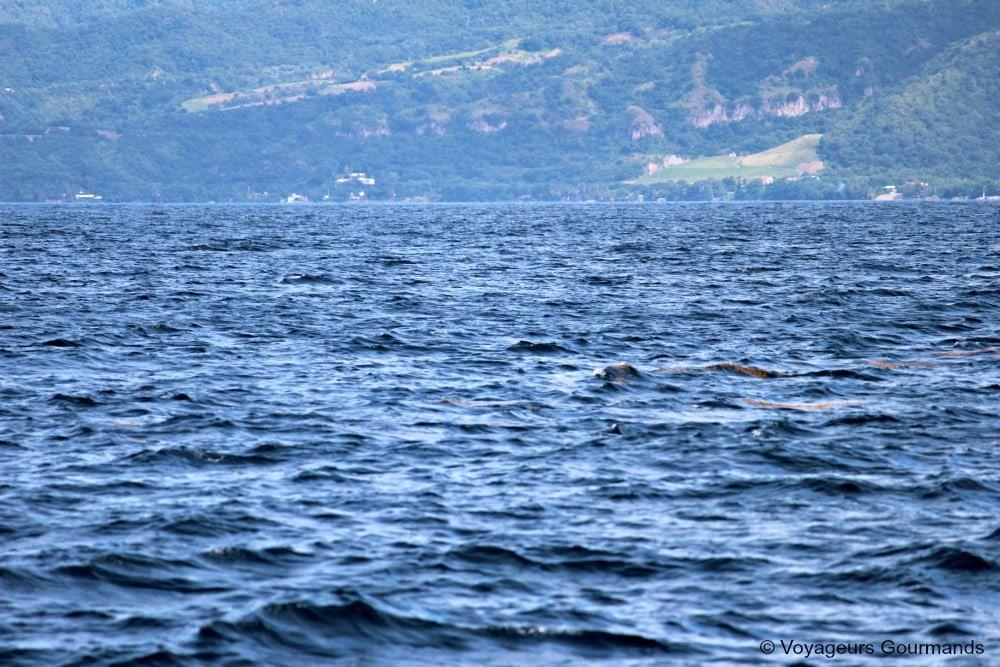 dauphins-en-martinique-3