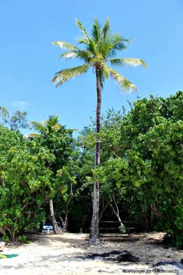 Plage de Martinique (11)