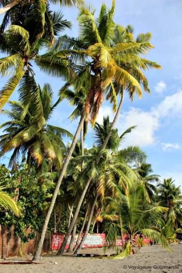 Plage de Martinique (22)