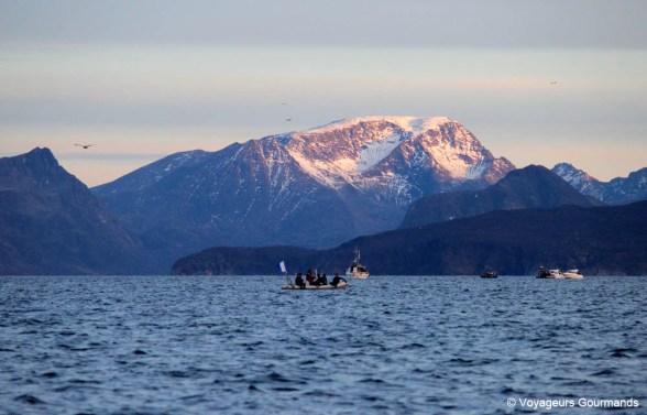 orques et baleines en norvege (19)