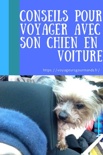 Conseils pour voyager avec son chien en voiture